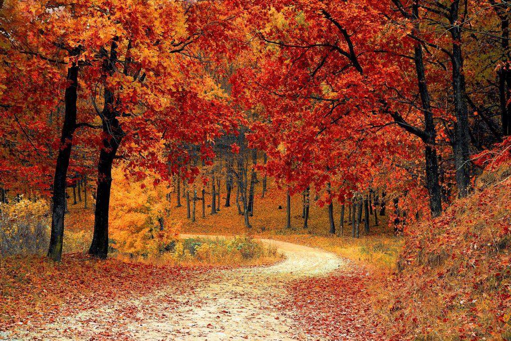 excursiones en furgoneta en otoño